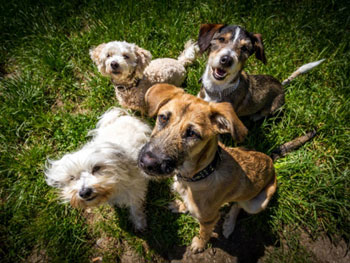 news-dogs